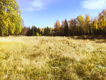 Autumn In The Russia Stockfoto