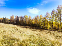 Autumn In The Russia Stockbild