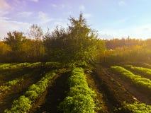 Autumn In The Russia Fotografia de Stock Royalty Free
