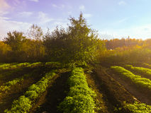 Autumn In The Russia Royaltyfri Fotografi