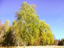 Autumn In The Russia Royaltyfria Bilder