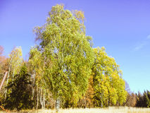 Autumn In The Russia Royalty Free Stock Images