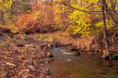 Autumn in the Russian forest. Far Eastern river. stock image
