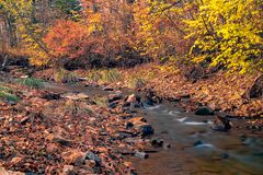 Autumn in the Russian forest. Far Eastern river. royalty free stock photos