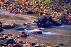 Autumn in the Russian forest. Far Eastern river. royalty free stock photo