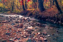 Autumn in the Russian forest. Far Eastern river. royalty free stock photography