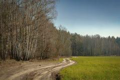 In autumns forest. In autumn russians birch forest stock photos