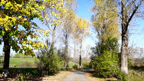Autumn , rustic landscape with rustling trees and falling leaves. stock footage