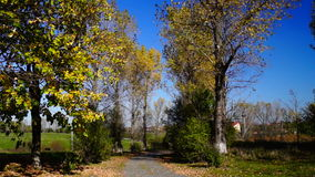 Autumn , rustic landscape with rustling trees and falling leaves.Sound. stock footage