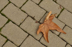Autumn rusty leaf on a brick road Stock Image