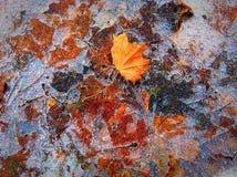 Autumn's art Stock Images