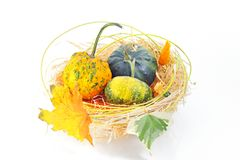 Autumn's basket Stock Photography