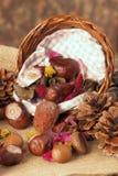 Autumn's colors Stock Images