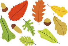 Autumn's day. A bunch of leaf, seed and nuts stock illustration