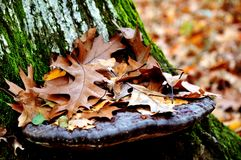 Autumn's dead leaves Royalty Free Stock Photos