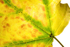 Autumn's Deatails. A leaf with autumn's colors Stock Photo