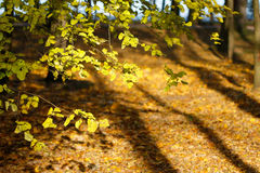 Autumn's forest Royalty Free Stock Photos
