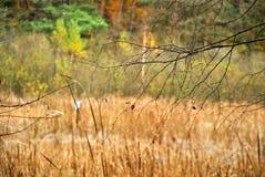 Autumn`s forest Stock Photos