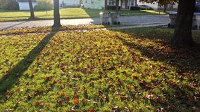 Autumn& x27;s Ground. Before walking in the house, this caught my attention Royalty Free Stock Photography