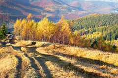 Autumn`s mystery. A beautiful morning panoramic scenery in the Ukrainian Carpathian mountains in the fall, with white fog flowing in between the hills and Royalty Free Stock Image