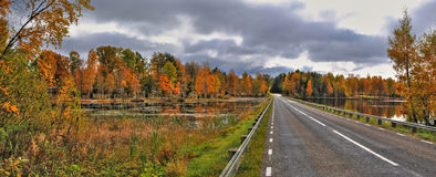 Autumn's road. In panoramic view Stock Images