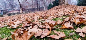 Autumn& x27;s  season at love garden in kashmir stock images