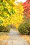 Autumn's walk Stock Image