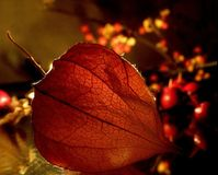 Autumn's warmth Royalty Free Stock Images
