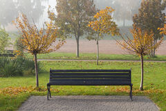 Autumn sakura trees and bench in the park Stock Images