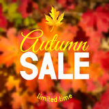 Autumn sale. Advertisement about the autumn sale on defocused background with leaves. Vector illustration Stock Photo