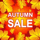 Autumn sale on maple leaves Royalty Free Stock Photo