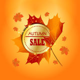 Autumn Sale Background Arkivbild