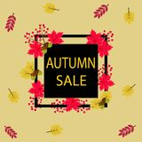 Autumn sale, background with branch of rowan, berries and leaves. Autumn sale text  banner with colorful seasonal fall leaves in orange background for shopping Royalty Free Stock Photography
