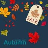 Autumn Sale Background con Autumn Leaves que cae Imágenes de archivo libres de regalías