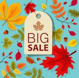 Autumn Sale Background con Autumn Leaves que cae Fotos de archivo libres de regalías