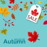 Autumn Sale Background mit fallendem Autumn Leaves Stockfoto