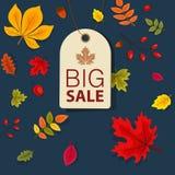 Autumn Sale Background mit fallendem Autumn Leaves Stockbilder