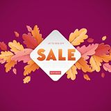 Autumn Sale Background Template avec la belle illustration de feuilles en vente de achat, affiche de promotion et bannière de Web Photographie stock libre de droits