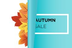 Autumn sale banner background vector with orange and green fall leaves behind Rolling paper stock illustration