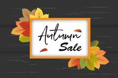 Autumn Sale banner background vector with orange and green fall leaves in frame with black wood background. This design element suitable for shopping sale vector illustration
