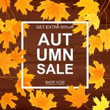 Autumn sale banner, beautiful yellow falling leaves Royalty Free Stock Photo
