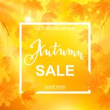 Autumn sale banner, beautiful yellow falling leaves Stock Image