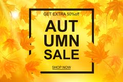 Autumn sale banner, beautiful yellow falling leaves Royalty Free Stock Images