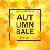Autumn sale banner, beautiful yellow falling leaves Stock Photos