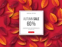 Autumn sale banner with 3d leaves and water drops. Pink background - template for seasonal discounts, vector. Autumn sale banner with 3d leaves and water drops vector illustration