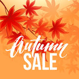 Autumn sale banner with fall leaves. Vector illustration Stock Photos