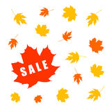 Autumn sale banner with maple leaf Stock Photo