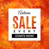 Autumn sale banner with oak leaves. Autumn sale banner with abstract background and oak leaves. Vector illustration. EPS 10 Royalty Free Stock Photos