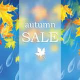 Autumn sale. Autumn banner with raindrops and  leaves of maple.Autumn sale Royalty Free Stock Photo