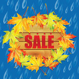 Autumn sale. Autumn banner with raindrops and leaves of maple.Autumn sale Stock Photos